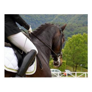 Horse with Raising Postcard
