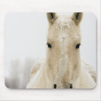 Horse with snow on head mouse pad