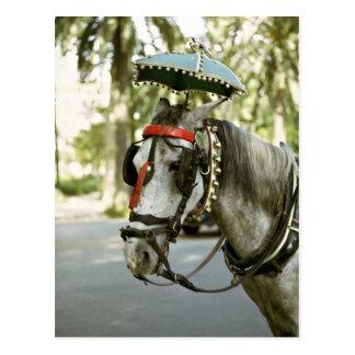 Horse with sunshade, Madrid, Spain Postcard