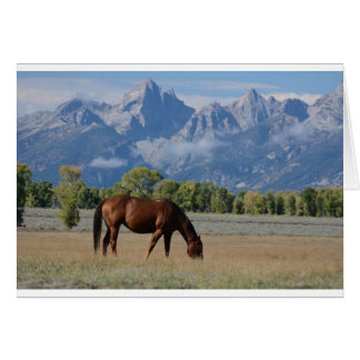 Horse, Wyoming Ranch Card