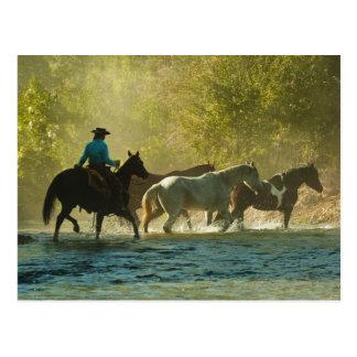 Horseback rider herding horses postcard