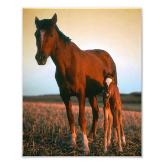 Horses a Mare and Colt Photo Print