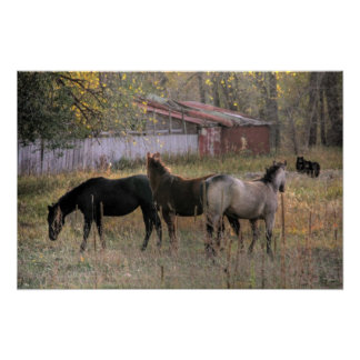 Horses and Bears Together Photo Art Poster