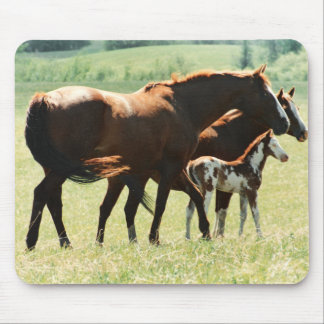 Horses and Foal Picture Mouse Pad