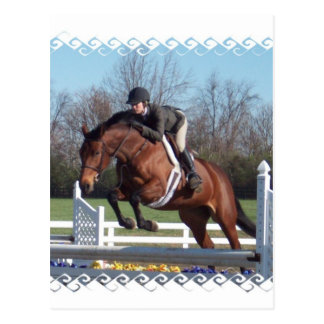 Horses and Show Jumping Postcard