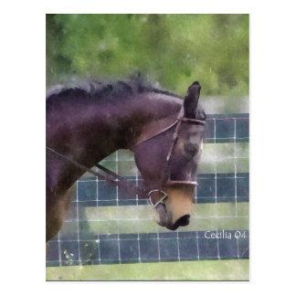 Horses are magic postcard