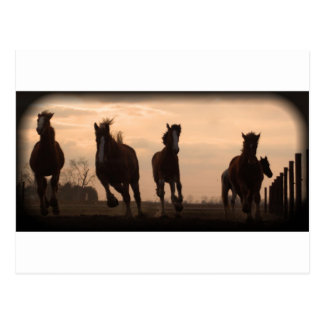 horses at sunset landscape postcard