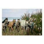 Horses At The Beach Print