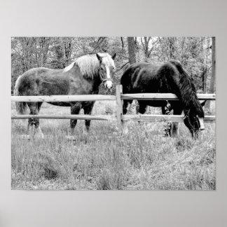 Horses Black & White -- Digital Photography Art Poster