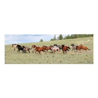 Horses Enjoying the Wide Open West Art Photo