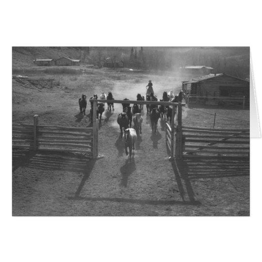 Horses entering a corral card