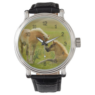 Horses foals in field. wristwatch