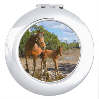 Horses, foals with mare makeup mirrors