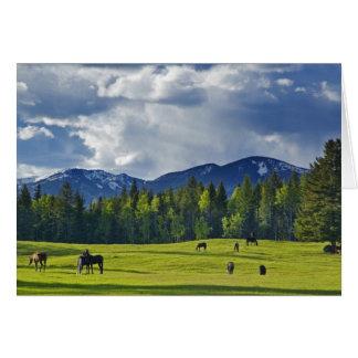 Horses graze in pasture near Whitefish, Card