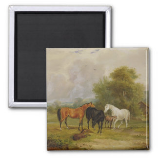 Horses Grazing: Mares and Foals in a Field (oil on Square Magnet