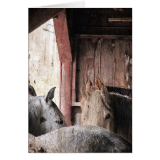 Horses in a Barn on a Rainy Day Card