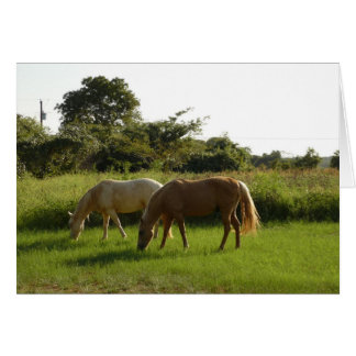 Horses in a field card