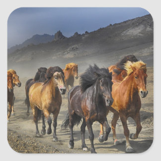 Horses in a shoot square sticker