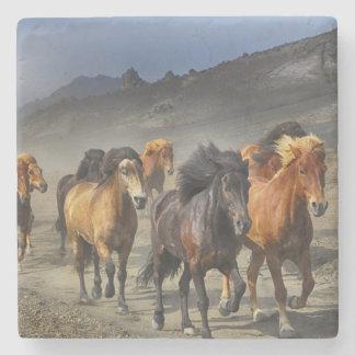 Horses in a shoot stone coaster
