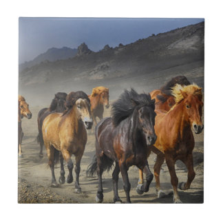 Horses in a shoot tile