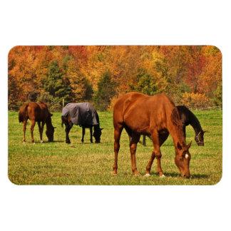 Horses in Autumn Magnet