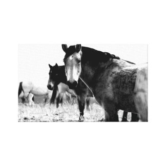 horses in black and white gallery wrap canvas