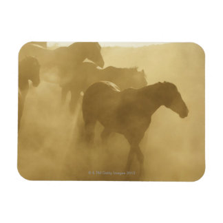 Horses in corral magnet