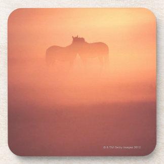 horses in dew coasters