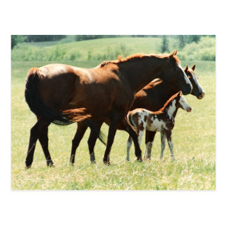 Horses in Field with Baby Colt Postcard