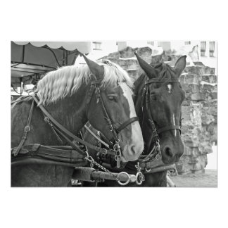 Horses in harness. photo print