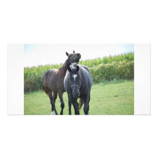 Horses in Love Custom Photo Card