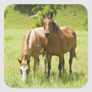 Horses in San Rafael Valley, Arizona Square Sticker