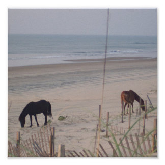 Horses in the Sand Poster