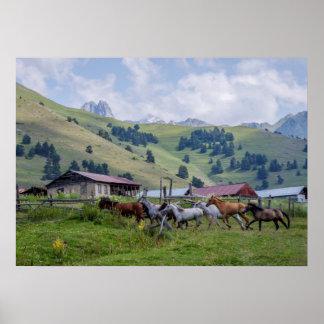 Horses in Tusheti mountains Poster