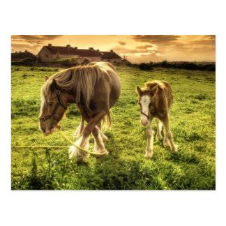 Horses Mother and Foal Postcard