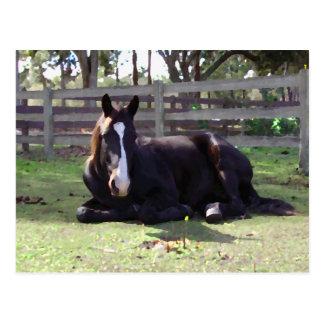Horses' Nap Time Postcard