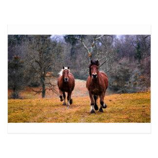 Horses Nature Postcard