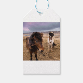 Horses of Iceland Gift Tags