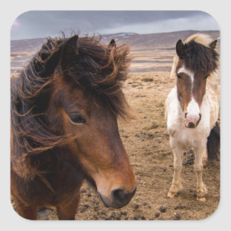 Horses of Iceland Square Sticker