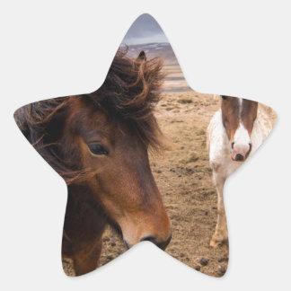 Horses of Iceland Star Sticker