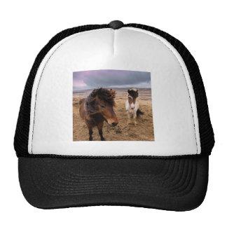 Horses of Iceland Trucker Hat