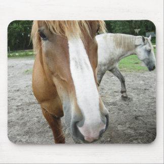 Horses of Ocala Florida Equestrian Art Mousepad