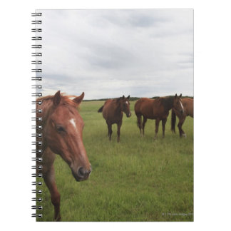 Horses On A Field Notebook