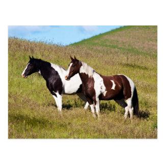 Horses on the hillside postcard