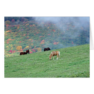 Horses on the Mountain Note Cards
