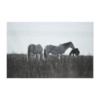 Horses on the Prairie canvas Gallery Wrap Canvas