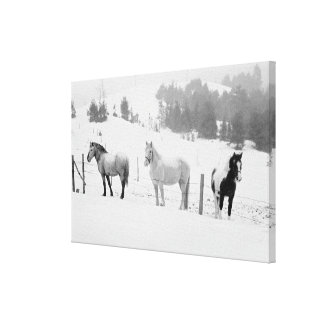 Horses on the Ranch Canvas Print