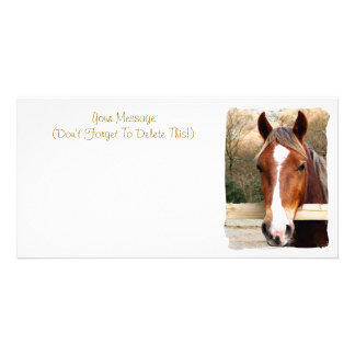 HORSES PHOTO CARDS