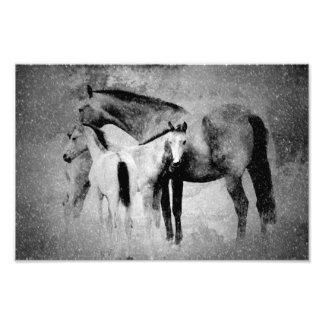 horses photograph
