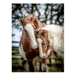 Horses/Ponies Postcard